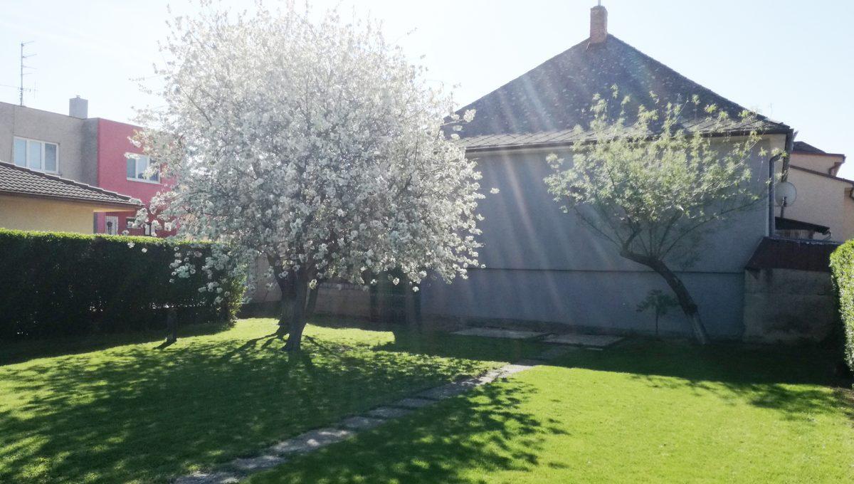 Bratislava-Podunajske-Biskupice-JK27-viacgeneracny-rodinny-dom-pohlad-na-ceresnu-strom-na-konci-pozemku-k-rodinnemu-domu-s-domom-suseda