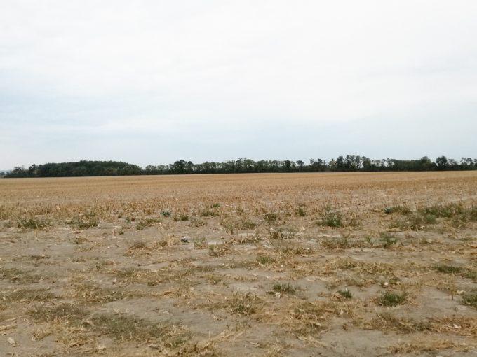 Puste-Ulany-rozsiahly-pozemok-316875-m2-pohlad-z-cesty-prvej-triedy
